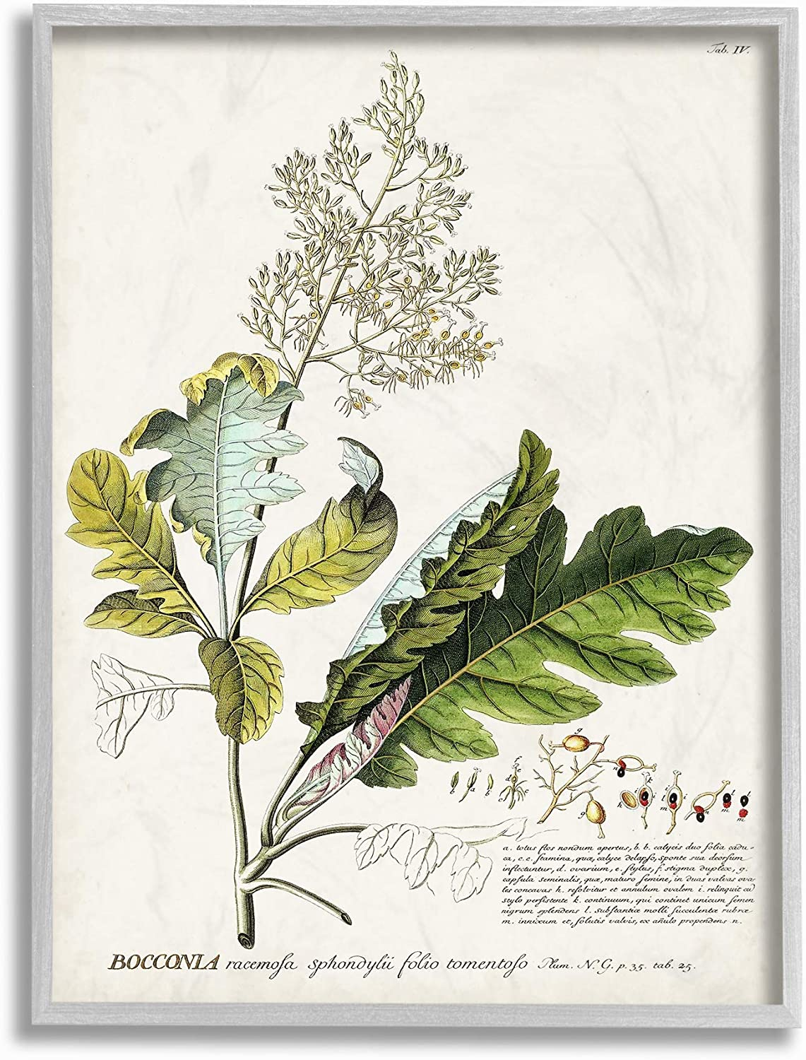 Stupell Industries Botanical Plant Illustration Leaves Vintage Grey Framed Wall Art, 16 x 20, Design by Artist Unknown