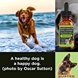 K2xLabs (30,000 MG 2-Pack) Busters Organic Hemp Oil for Dogs & Cats - Max Potency - Made in USA - Omega Rich 3, 6 & 9 - Hip & Joint Health, Natural Relief for Pain, Separation Anxiety