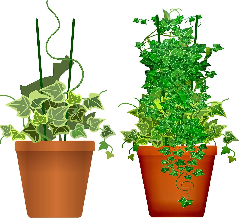O/&W Security 40 St/ück Pflanzenst/äbe Pflanzenst/ützen Tomatenst/äbe Rankhilfe aus Holz gr/ün 40 cm /ökologisch 100/% kompostierbar