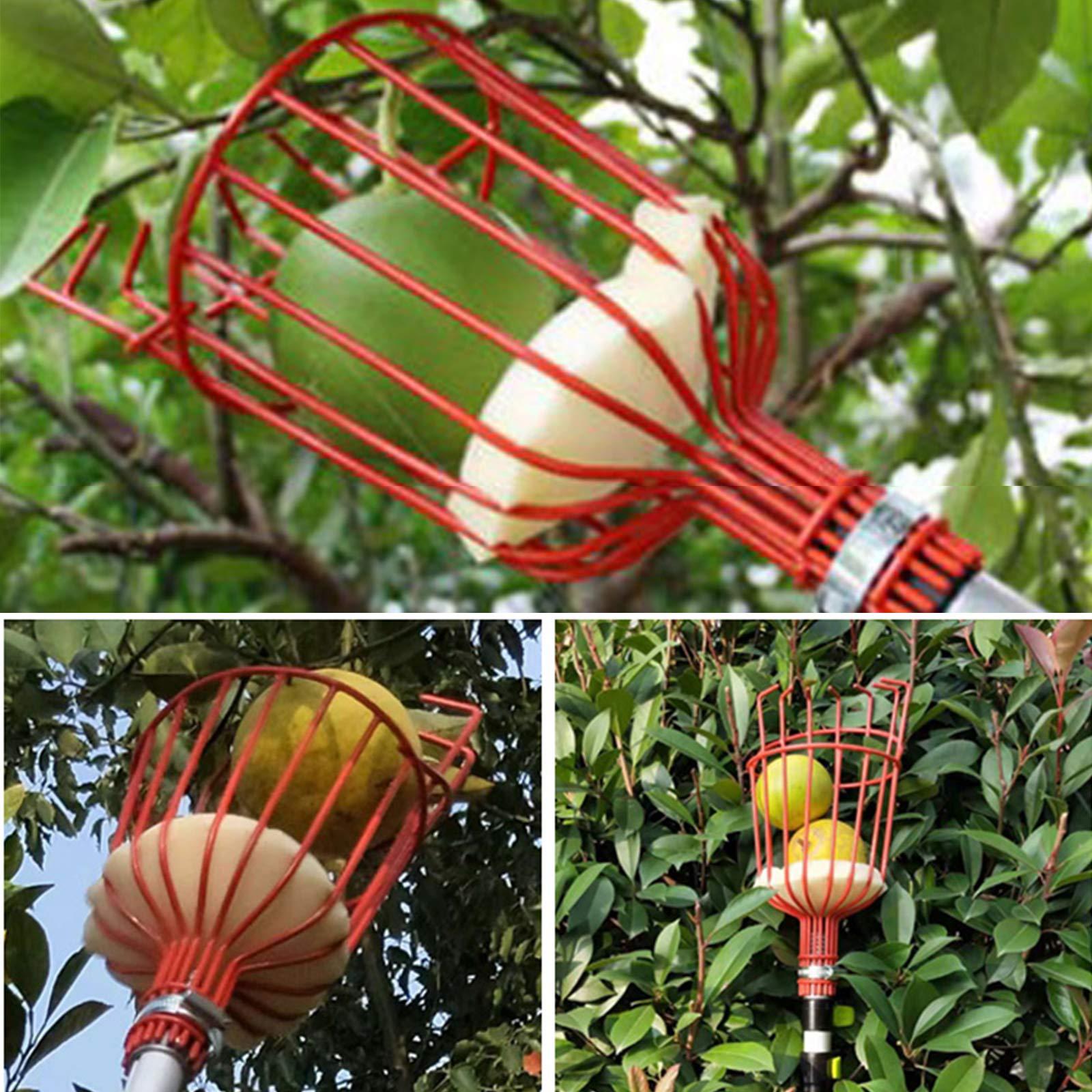 Voilamart Obstpflücker mit Teleskopstange,4 m Verstellbarer Erntehelfer Obsternte Obstgreifer Apfelpflücker für Obsternte Garten Apfel Birne Pfirsich Werkzeuge,Leicht Schwarz Aluminiumlegierung
