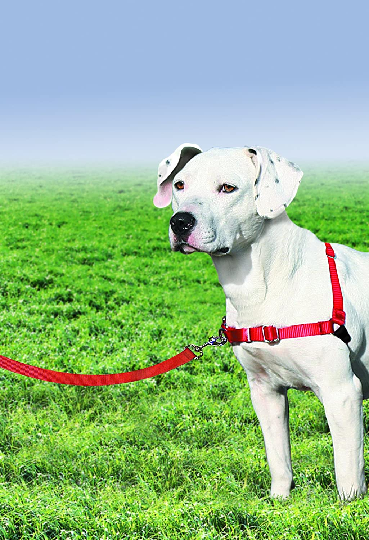 Amazon.com : PetSafe Easy Walk Harness, Medium, RED/BLACK for Dogs