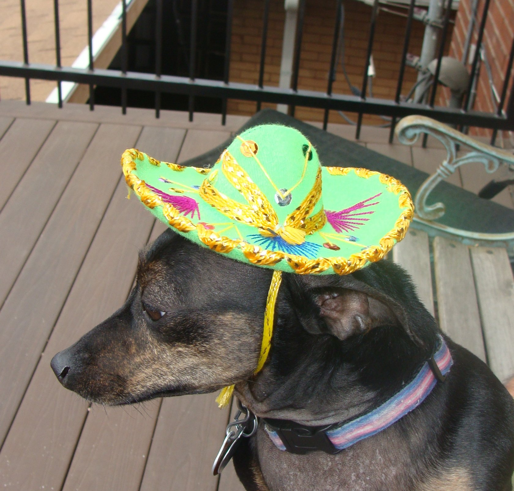 Mini Charro 12 Pack Velvet Assorted Color Sombreros 5'' Mariachi Pack Pet Hat Decor by Sanyork Fair Trade