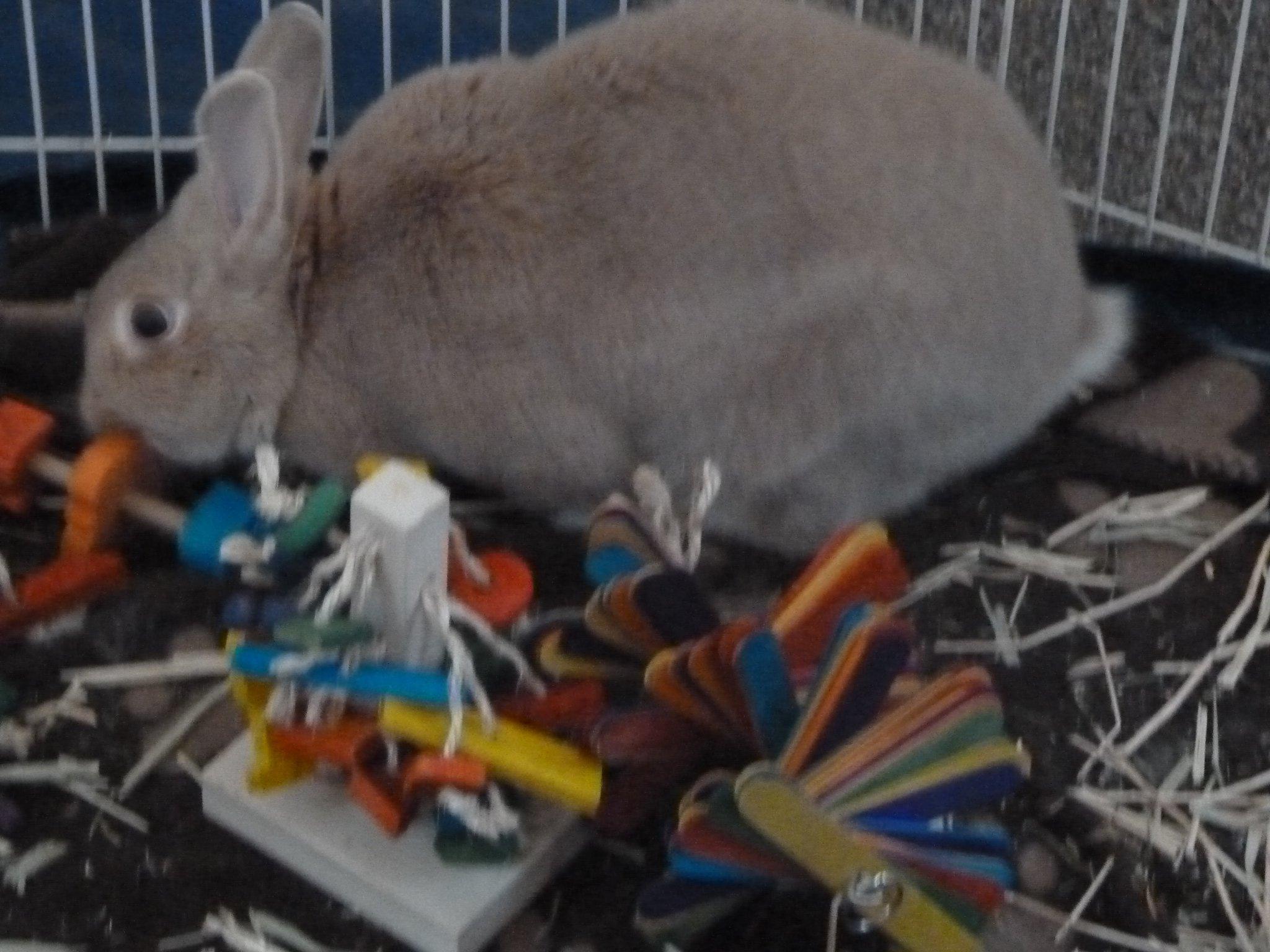 ''The Tree'' Pet Rabbit Toy by Happy Rabbit Toys