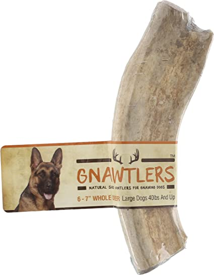 Gnawtlers - Premium Deer Antlers For Dogs, Naturally Shed Deer Antlers, All  Natural Deer Antler Dog Chew, Specially Selected From The Heartland