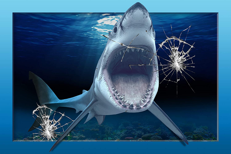 Blacktip Shark Lurking (Copy)