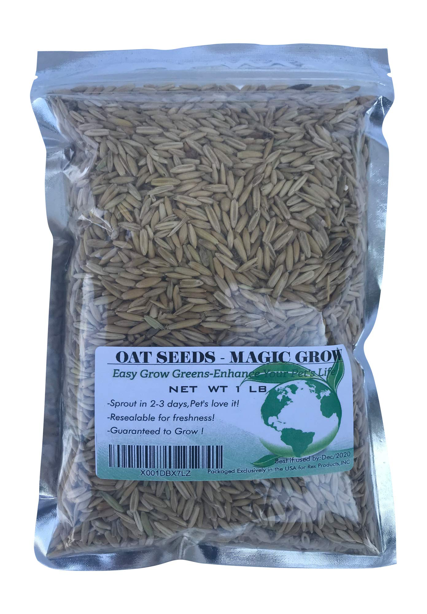 Oat Grass Seeds 1 Lb (3000+ Seeds)- Cat,Dog,Pets- Oat Grass Seeds
