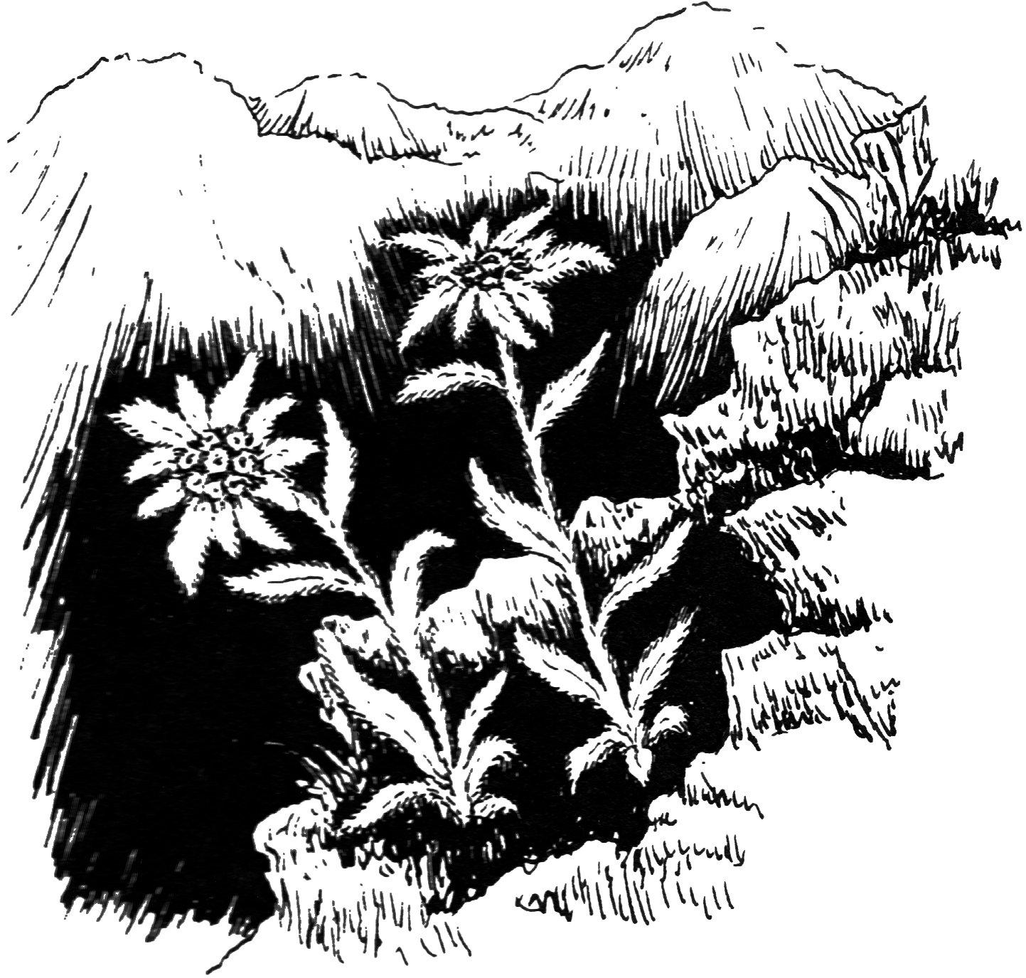 7 cm x 5 cm acrílico llavero de dibujo Edelweiss: Amazon.es ...