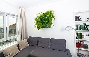 Minigarden® - der Mini Garten für zu Hause, Balkon, Terrasse- in der ...