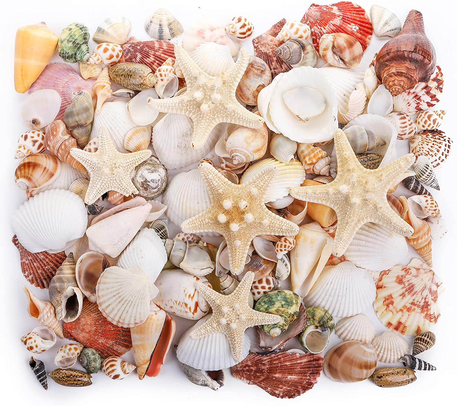 yarlung 1.1 Pounds Mixed Beach Seashells Starfish, Colorful Natural Seashells Supplies for Fish Tank, Home Decorations, Beach Theme Party, Candle Making, Wedding Decor, DIY Crafts