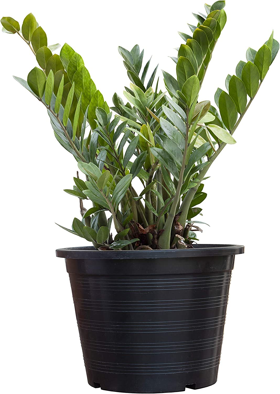 Slow Growing Indoor Plants