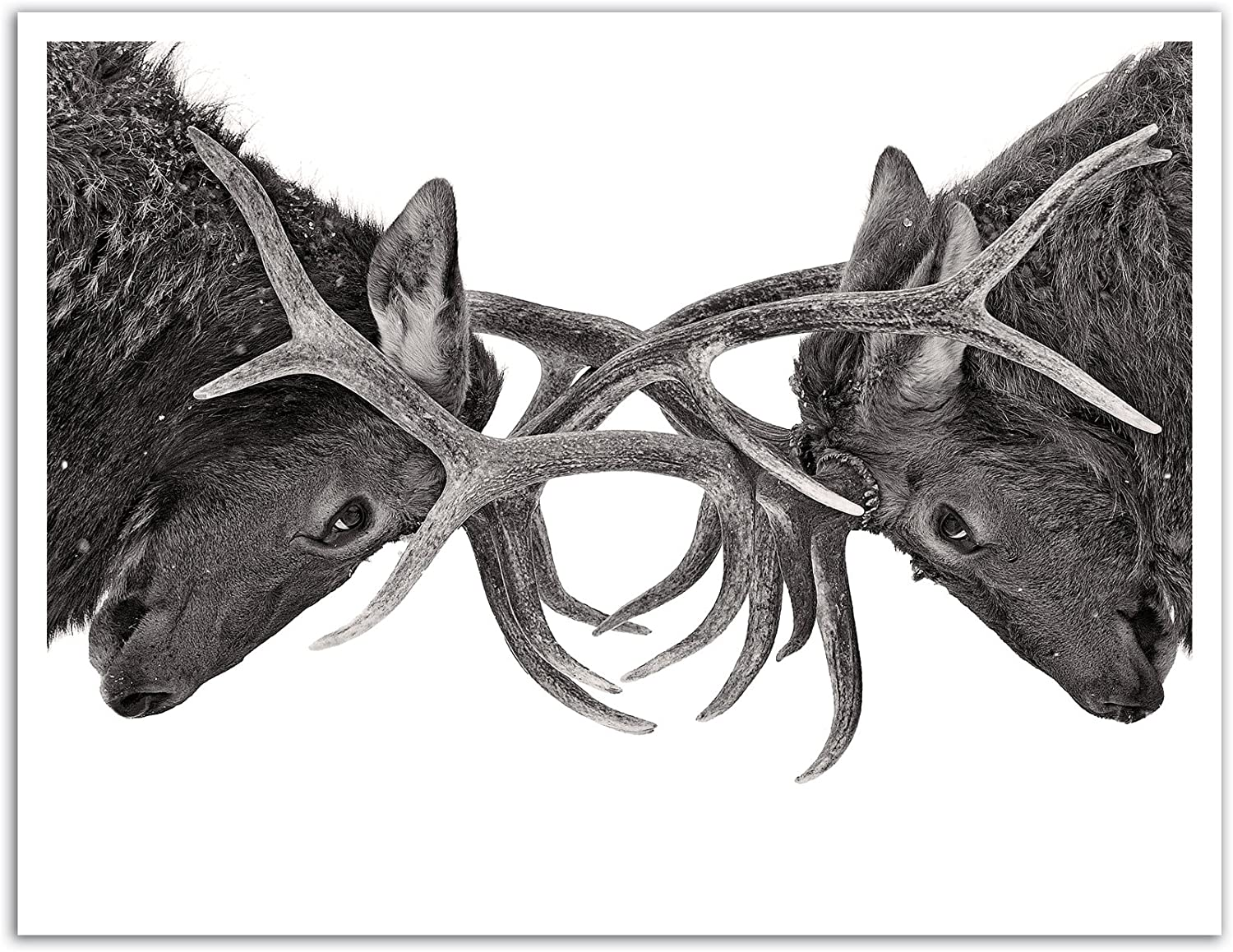 JP London POS1X887177 Jpl and Jim Cumming Present Eye to Eye Elk Reflection Nature Animal 25.75 by 19.75 Peel and Stick Fully Removable Wall Poster Mural