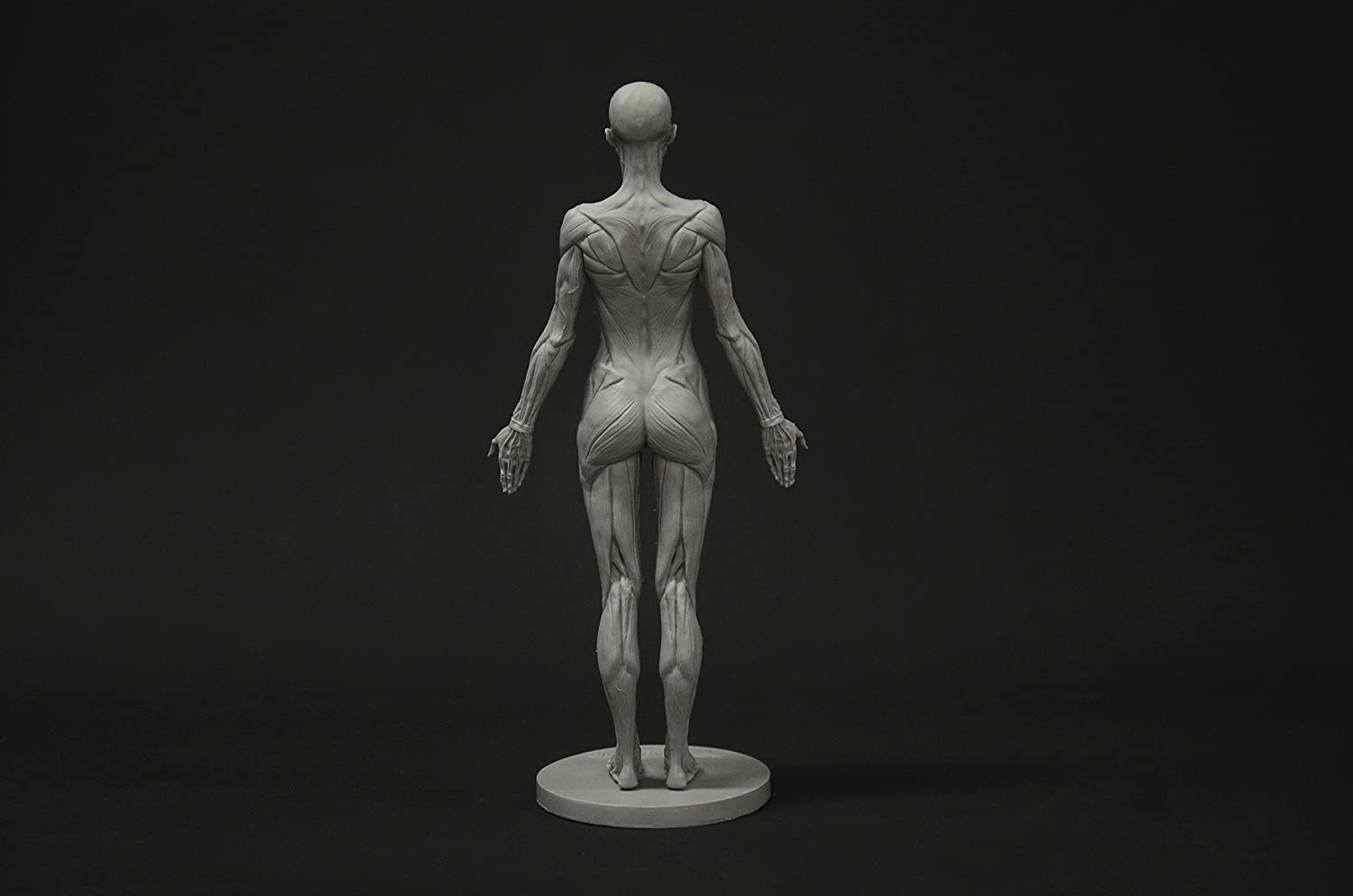 Female Anatomy Figure Collection: Planar, Ecorche and Skin ...