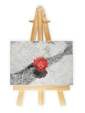 prächtige seltene Kaktusblüte schwarz/weiß rot gemalt, Format: 7x10 ...
