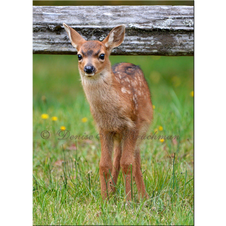 Spotted Baby Deer Photo - Spotted Fawn Photo - Photos Baby Animals - Photos Baby Deer - Nursery Art - Kids Room Art - Deer Photos