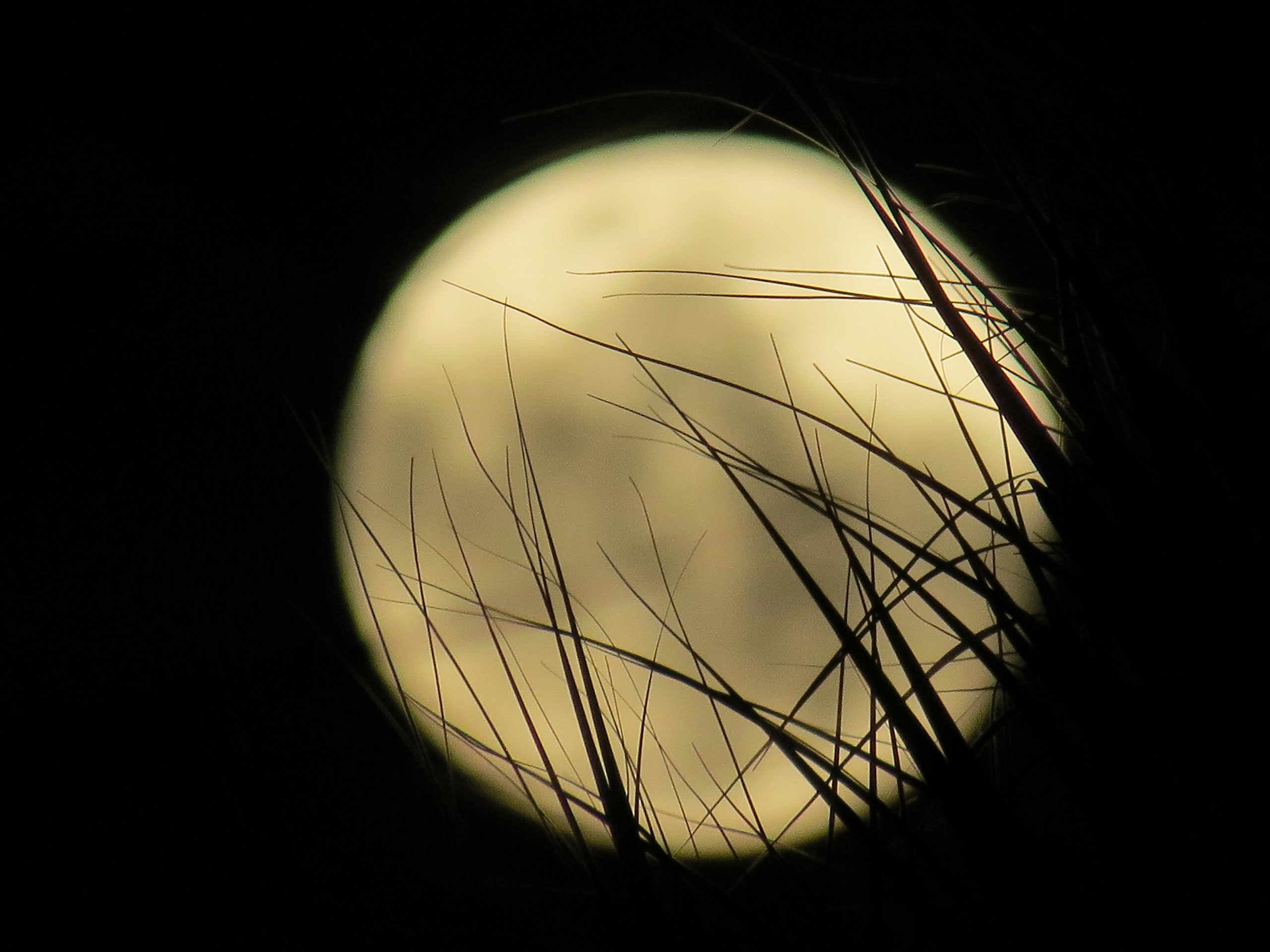 Yellow Moon by
