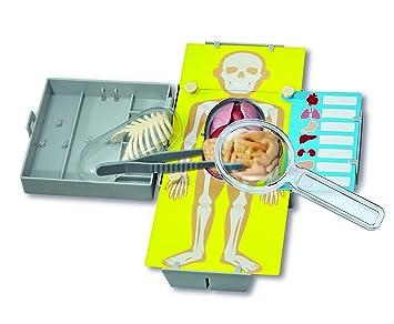 4 M de órganos humanos Kit de aprendizaje