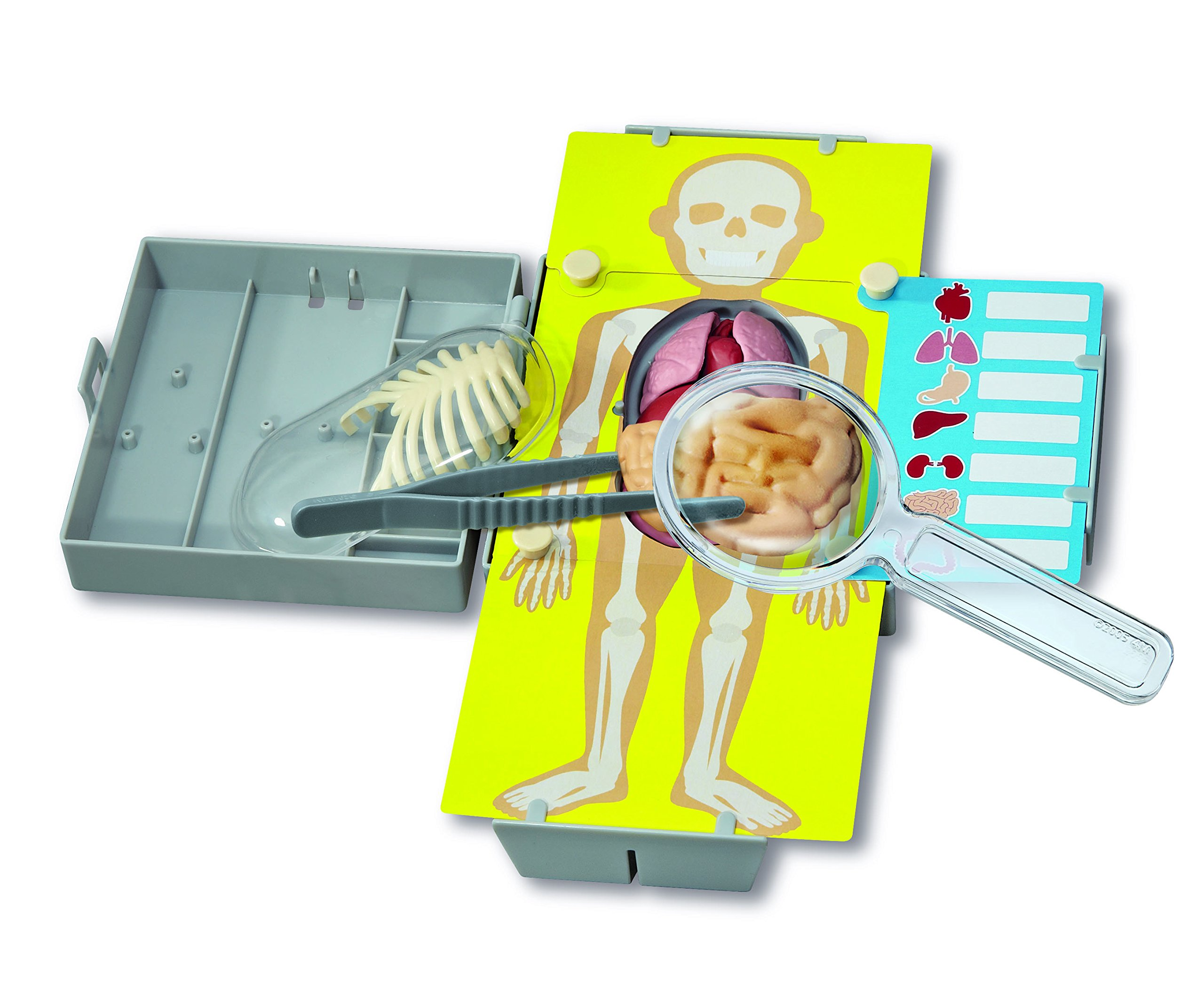 4M Human Organs Learning Kit