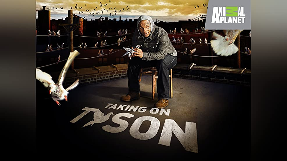 Taking on Tyson Season 1