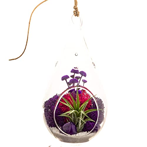 Bliss Gardens Air Plant Terrarium Kit With 7 Teardrop Glass Moss Flowers And