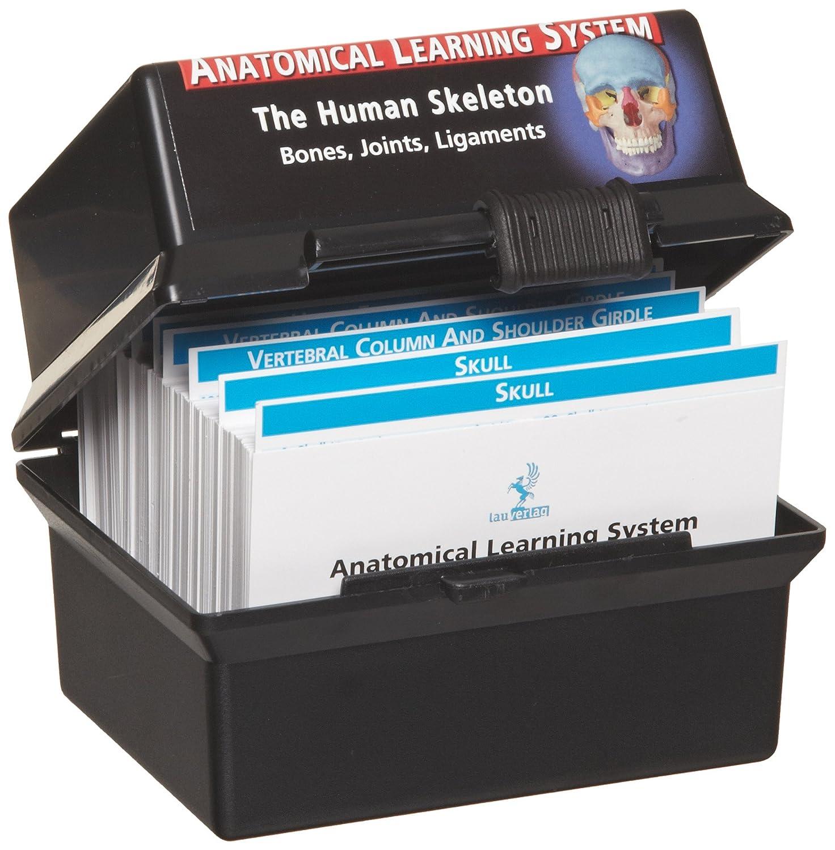 3B Scientific W11505 The Skeletal System Human Anatomy Flash Cards, 4-1/8' Length x 3' Width 4-1/8 Length x 3 Width