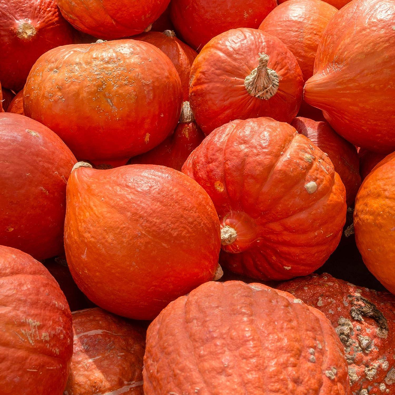 Squash Seeds - Winter - Gold Nugget - 4 Oz ~680 Seeds - Cucurbita Maxima - Farm & Garden Vegetable Seeds - Non-GMO, Heirloom, Open Pollinated, Annual