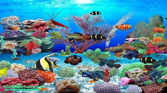 Fond d 39 ecran anime aquarium windows 8 for Fond ecran aquarium