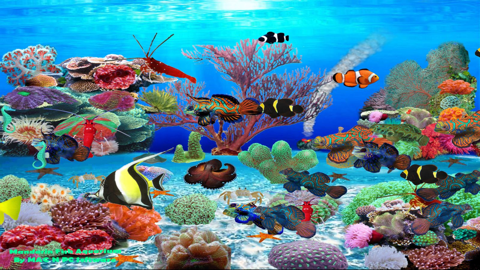 Mandarin Fish Aquarium [Download]