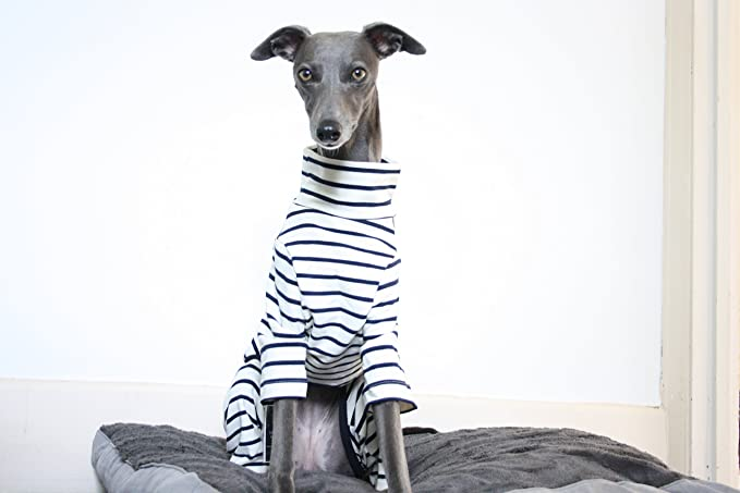 The Trendy Whippet Pijama de color crema y azul marino con diseño de rayas, azabache italiano, galgo, lurcher, sighthound, saluki Clothing: Amazon.es: ...