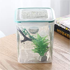 crapelles spider mantis bottle breathable outdoor natural critter exploration tools science educational research butterfly frog insect colored cage habitat bug catcher animal caterpillars container cr