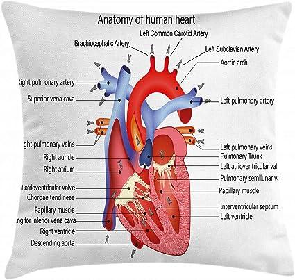 vene nel corpo umano