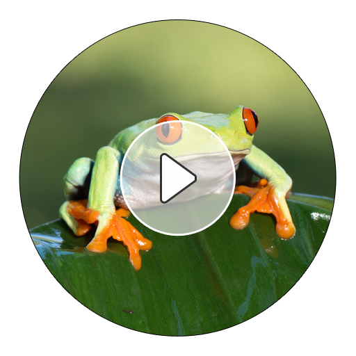 Frog Sounds And Ringtones