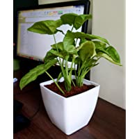 NOVICZ Indoor Plant Pot for Home Office, 10 x 10 x 7 cm