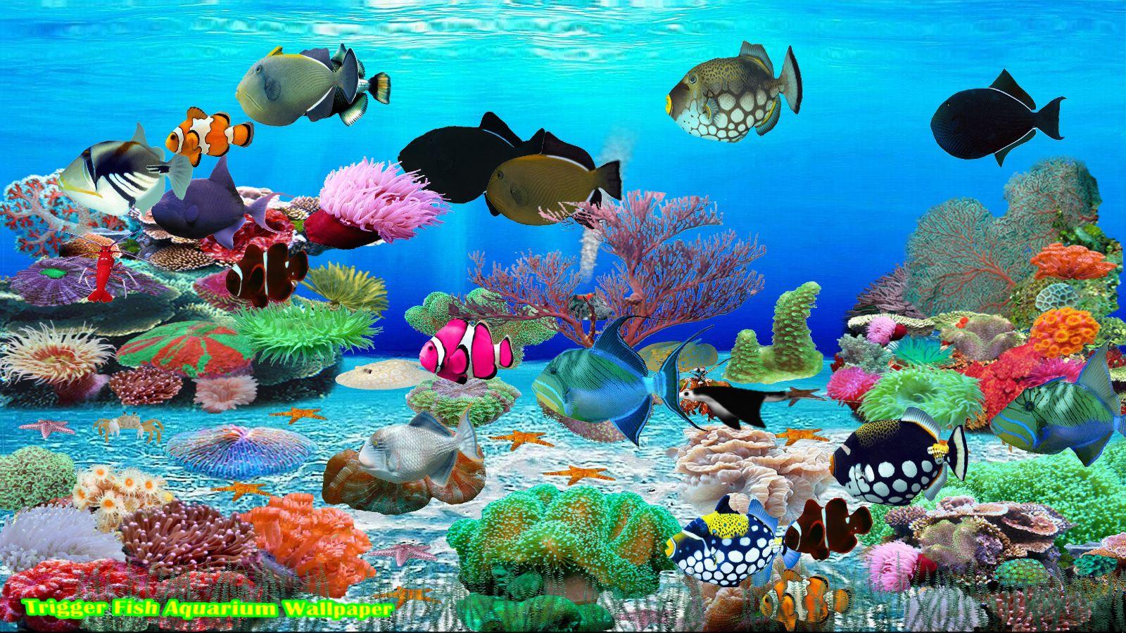 Marine Aquarium Deluxe for Windows Download Crack Activated