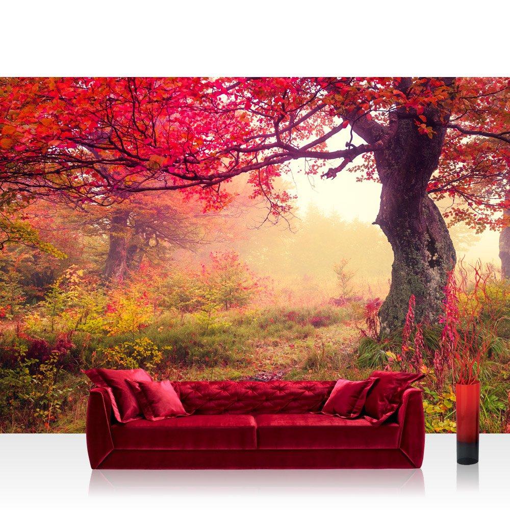 Vlies Fototapete 400x280 cm - Top   PREMIUM PLUS Foto Tapete   Wandbilder XXL Wandbild Bild Fototapeten Tapeten Wandtapete Wanddeko Wand Wald Bäume Herbst - no. 258