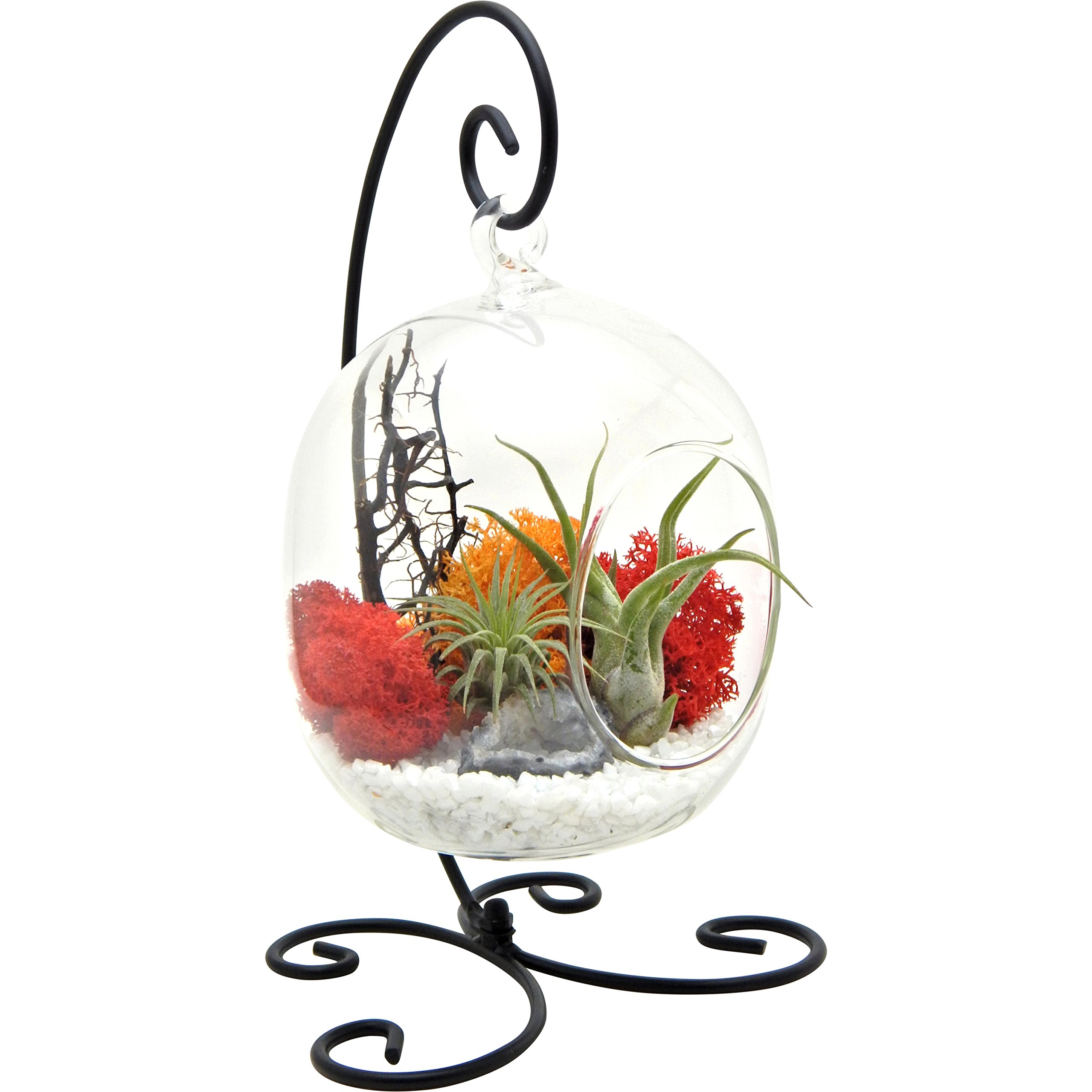 Bliss Gardens Air Plant Terrarium Kit with 6'' Oval Glass with Geode Crystal - Sunburst On Ice - Small Black Metal Stand Included by Bliss Gardens