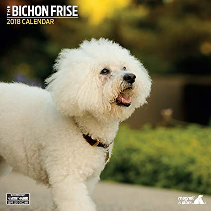 amazon com bichon frise 2018 traditional wall calendar office