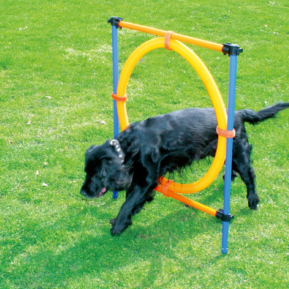 PAWISE Pet Dogs Outdoor Games Agility Exercise Training Equipment Jumping Ring by PAWISE