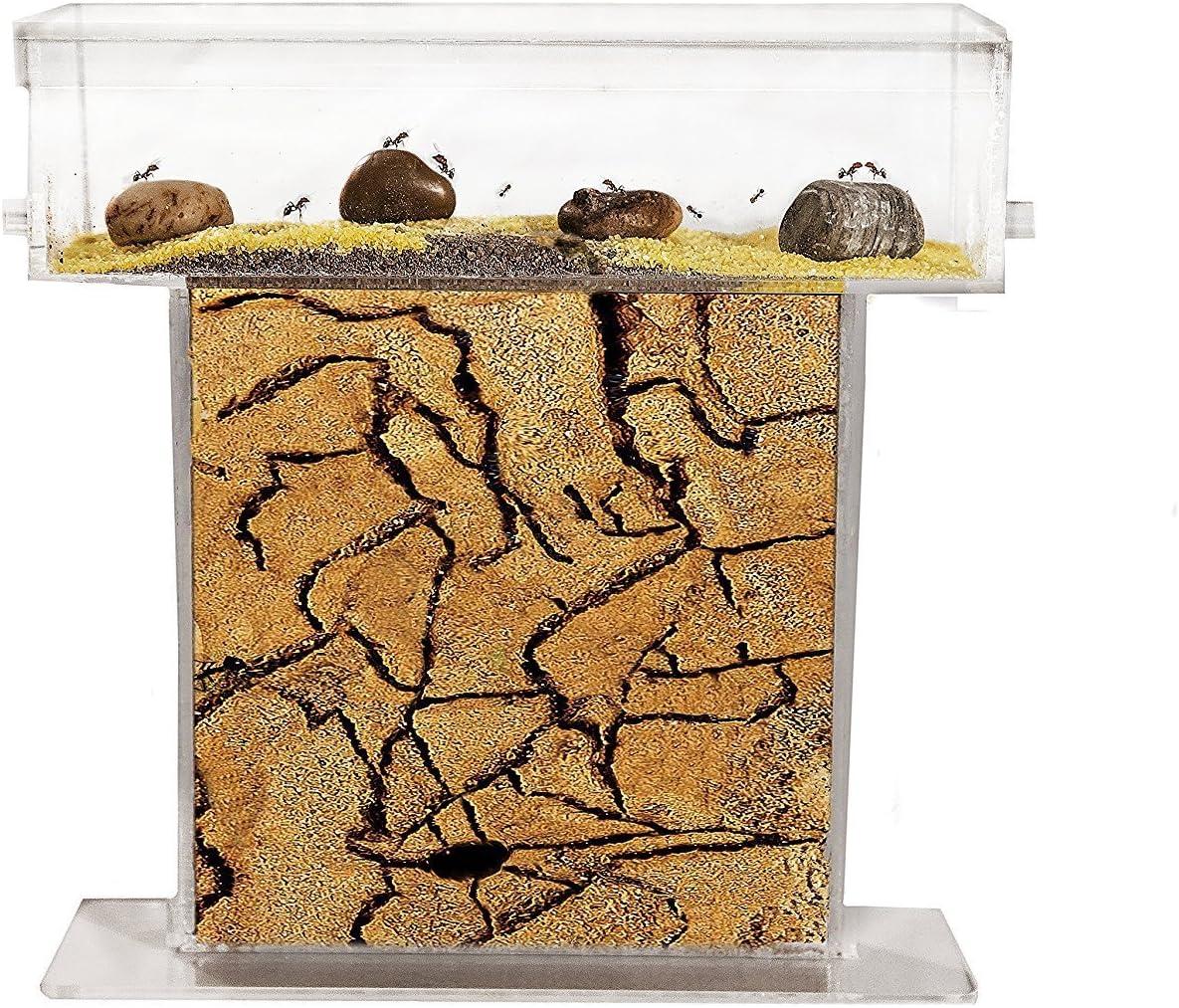 AntHouse - Hormiguero Natural de Arena - Kit T Acrílico 15x15x1,5 cm (Hormigas Gratis)