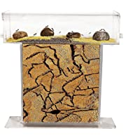 Anthouse.es - Hormiguero Natural de Arena - Kit T Acrílico 15x15x1,5 cm (Hormigas Gratis)