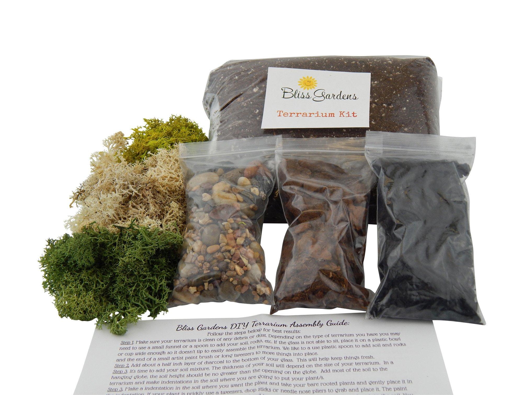 Terrarium DIY Succulent / Cactus Kit (Large)