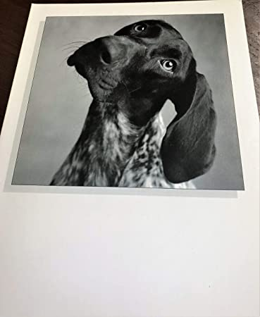 Funny Dog Birthday Card 2 For 1 Comes With Extra Free
