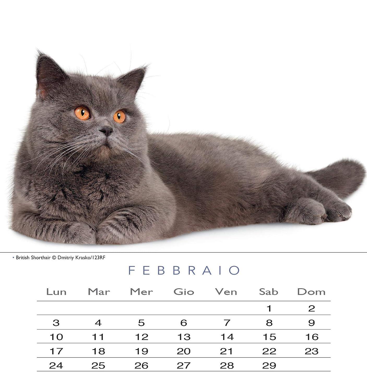 Gatti Calendario 2020 da tavolo