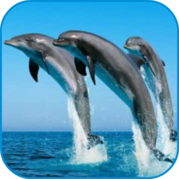 Amazon Dolphins Wallpaper Appstore For Android