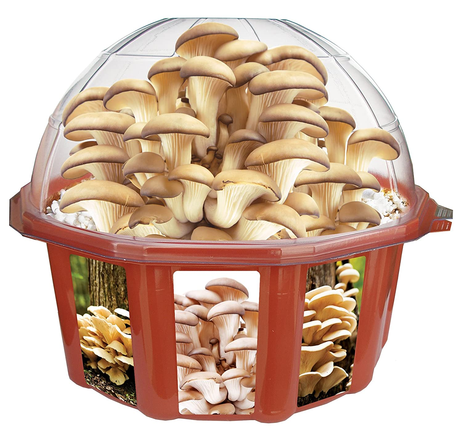 Design Your Own Kit Home Perth How To Make A Homemade Mushroom Grow Kit Homemade Ftempo