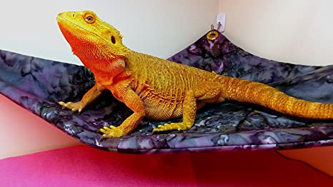 Carolina Designer Dragons Hamaca Dragones barbudos, Bluegreen ...