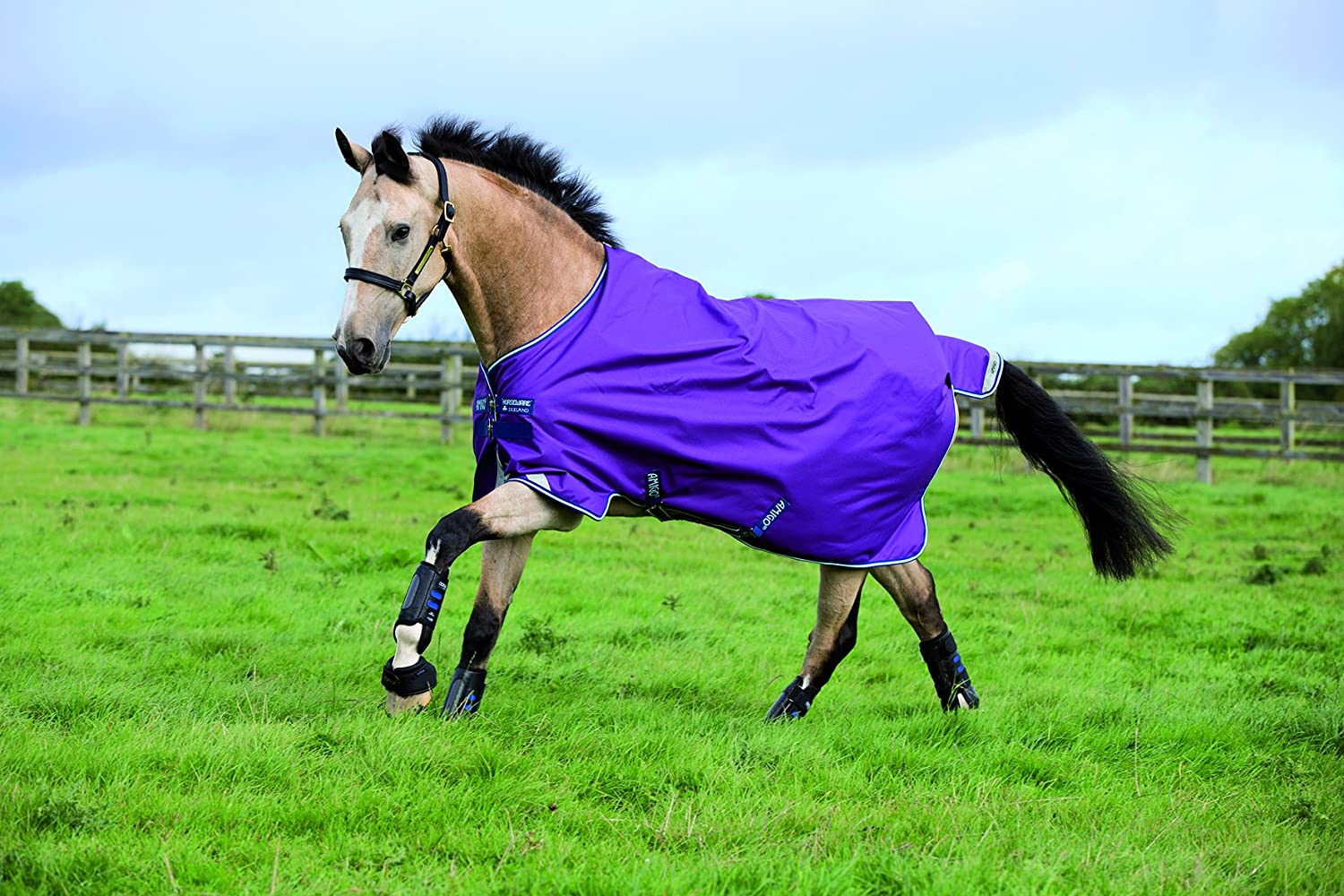 Horseware Amigo Bravo 12 Turnout 100g - Purple/Navy