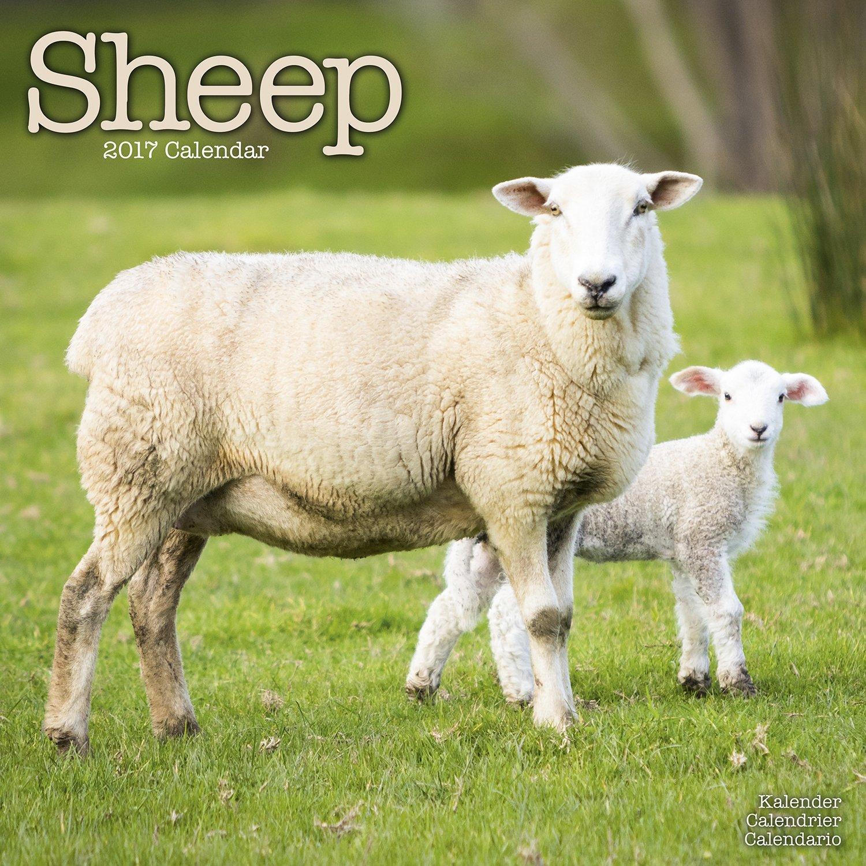 Sheep Calendar Animal Calendars Avonside product image