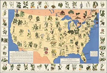 Amazoncom Map Poster  Medicinal plant map of the United States