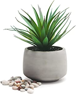 "Kurrajong Farmhouse Green Artificial Plant in Pot, Decorative Faux Plant and Pot for The Home, Office, Desk, Dorm or Classroom. 7""x 4.5"" Feaux Plant Potted"