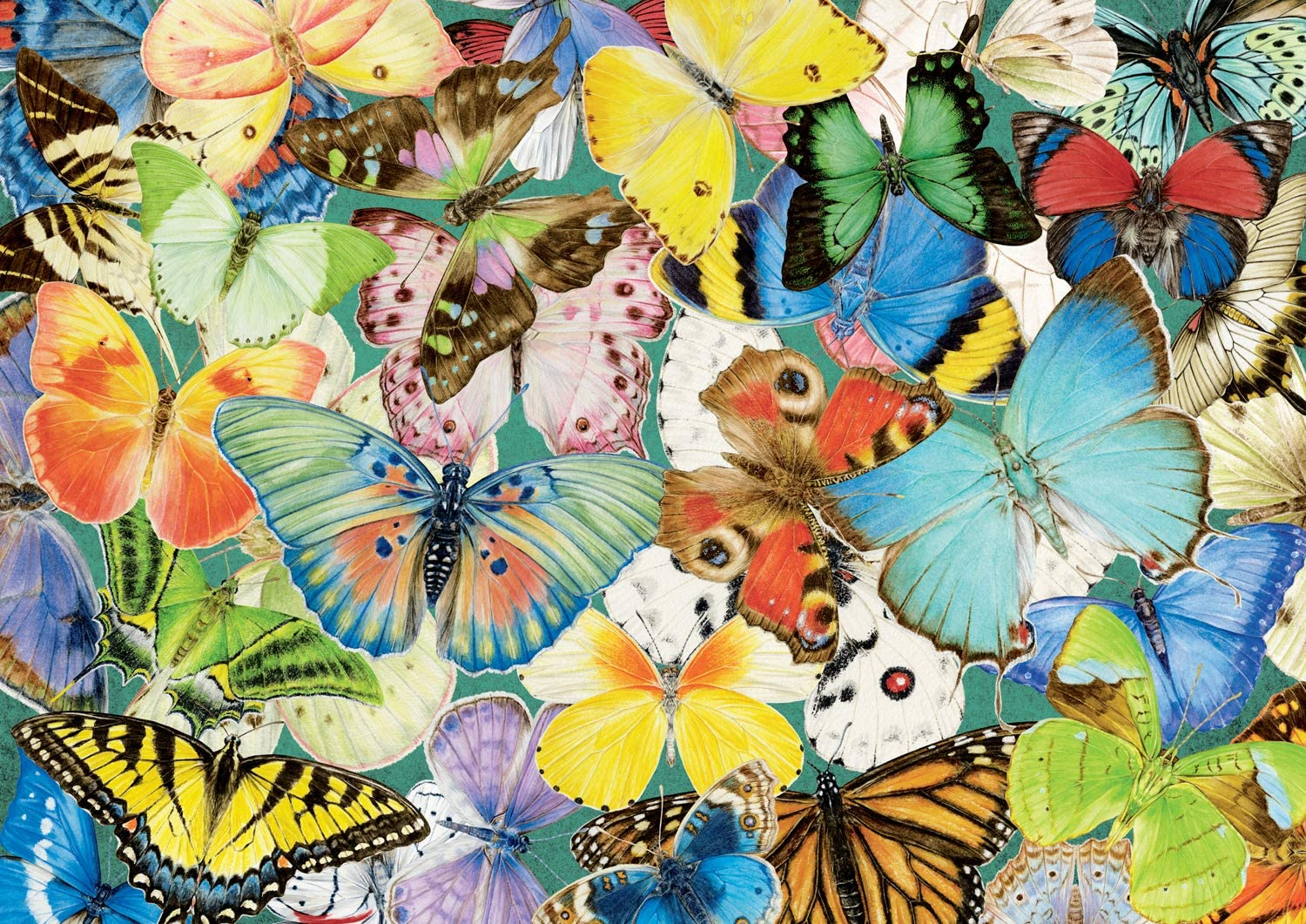 Mudpuppy Butterflies of North America 500 Piece Family Jigsaw Puzzle Butterfly Puzzle with Recognizable Butterflies from Around North America